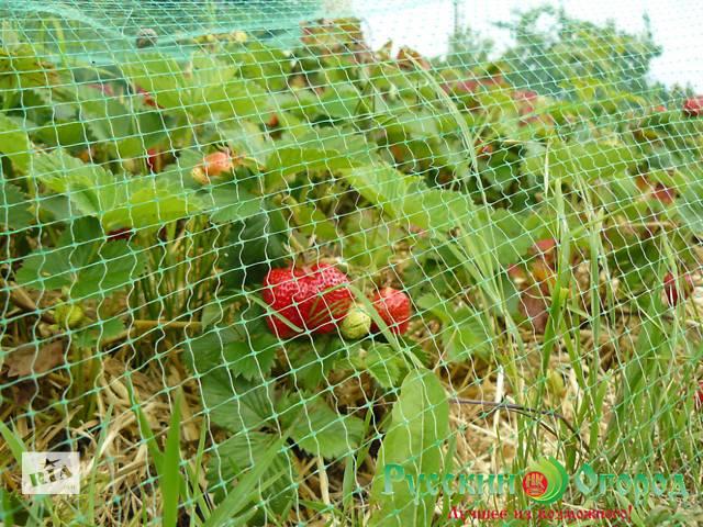 купить бу Сетка от птиц (4м*10м) защитная на деревья, кустарники, виноградники в Киеве