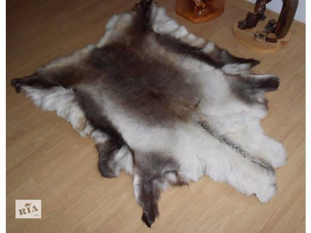 Северный (финскией) олень- объявление о продаже  в Тернополе