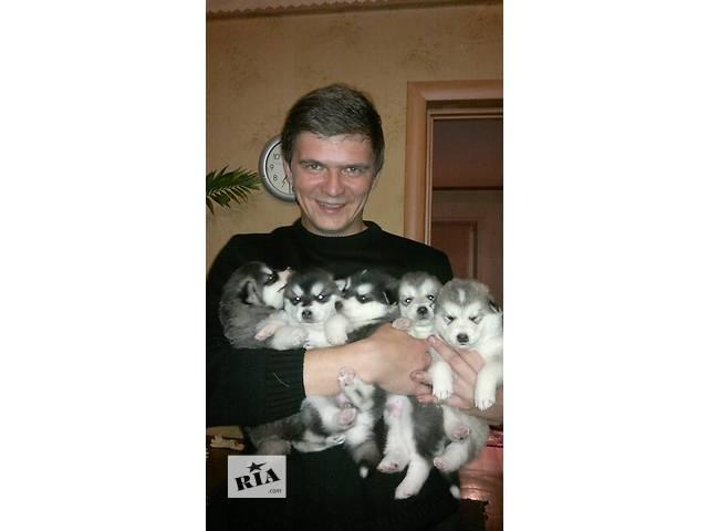 Щенки Аляскинского маламута- объявление о продаже  в Донецке