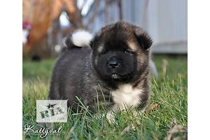 Собаки, щенки в Запорожье - объявление о продаже Вся Украина