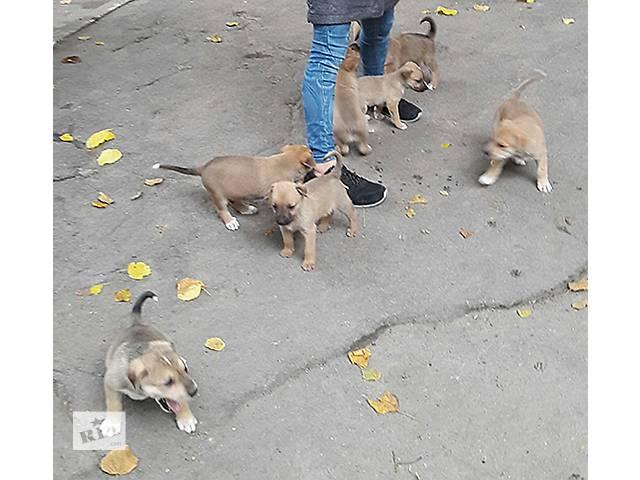 Щеночки ищут заботливых хозяев- объявление о продаже  в Днепре (Днепропетровске)