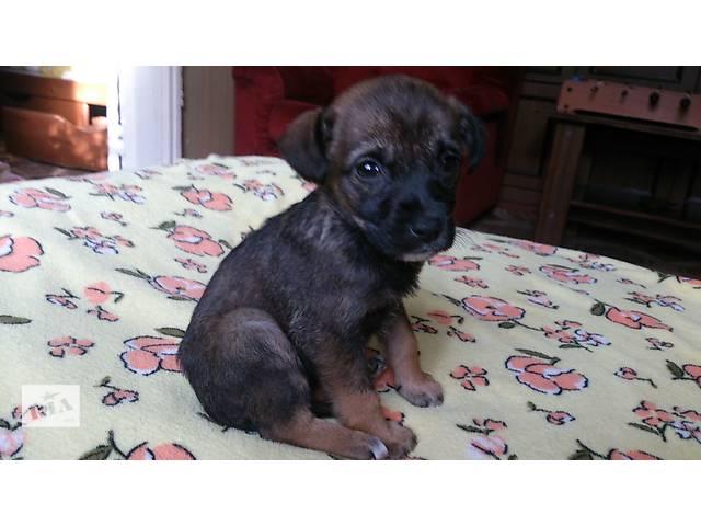щенок бесплатно- объявление о продаже  в Донецке