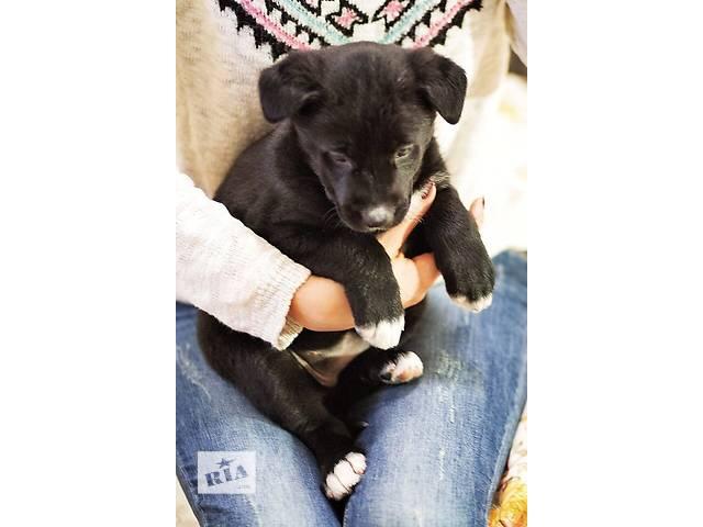 купить бу щенок в дар в Киеве