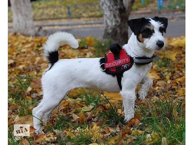 Шлеи для собак Collar Police- объявление о продаже  в Киеве