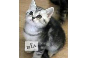 Оголошення Кішки, коти, кошенята