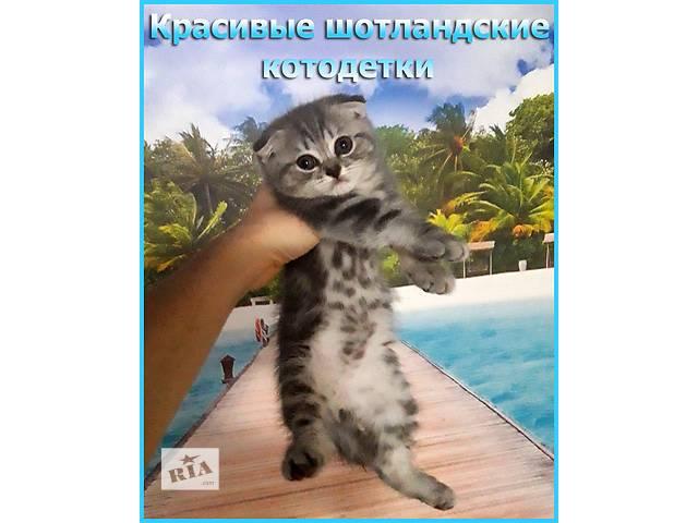 купить бу Шотландские котята вислоушки и прямоушки ищут любимых хозяев! в Одессе