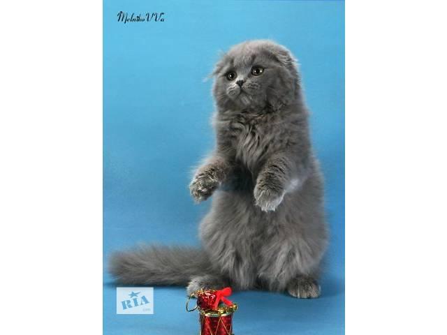 купить бу Шотландские котята: хайленд фолд и страйт, скоттиш фолд и страйт в Днепре (Днепропетровск)
