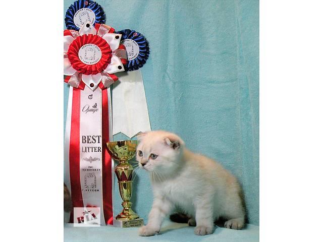 бу Шотландский котенок мальчик  линкс(тикированный?) поинт в Новой Каховке