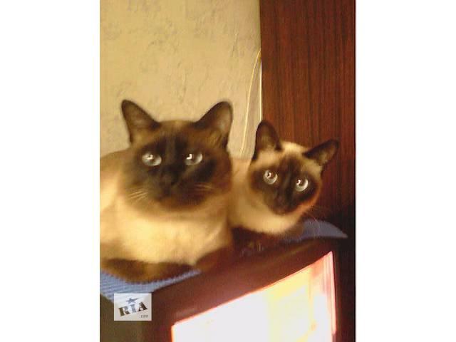 продам Шикарные котята бу в Одессе