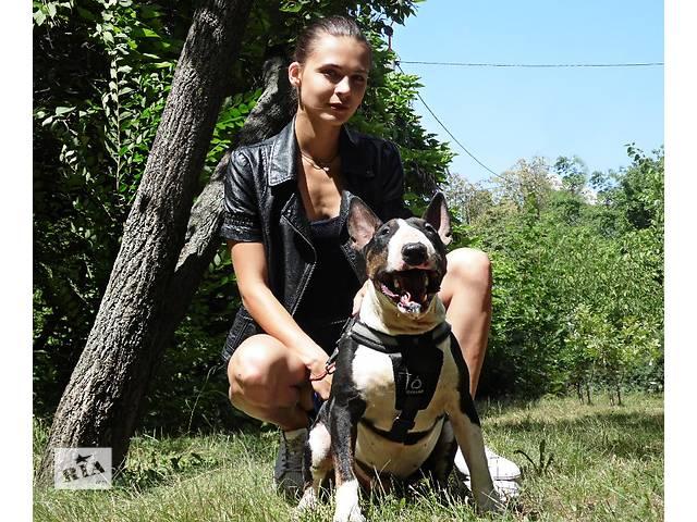 купить бу Шикарные щенки Бультерьера! в Киеве