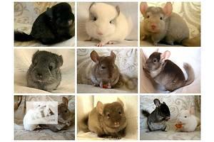 Объявления Другие животные