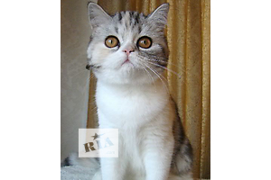 Кошки, коты, котята - объявление о продаже Одесса