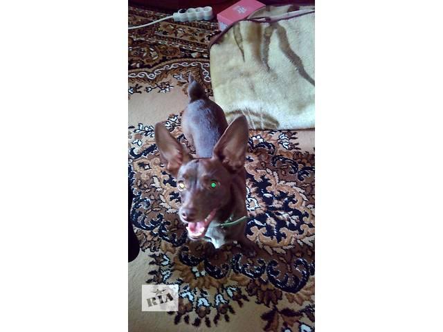 продам Собака бесплатно бу в Чернигове