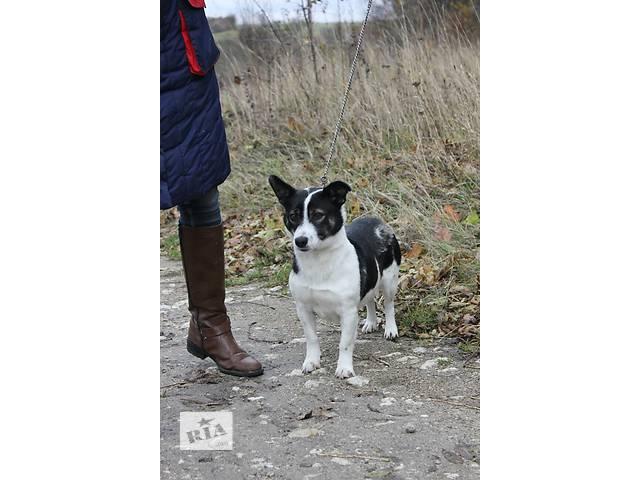 Собака ищет дом!- объявление о продаже  в Тернополе