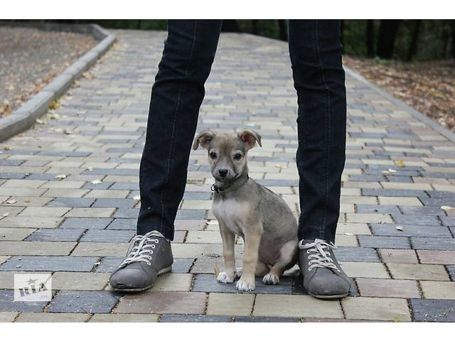 Собака в добрі руки. - объявление о продаже  в Тернополе