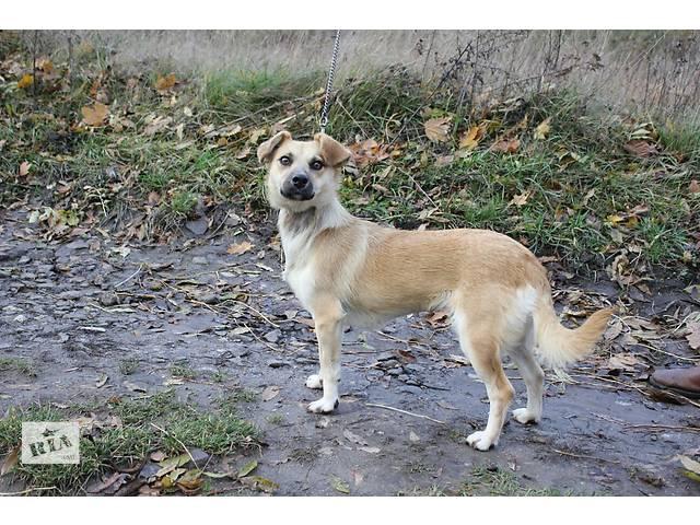 купить бу Собака в добрые руки в Тернополе