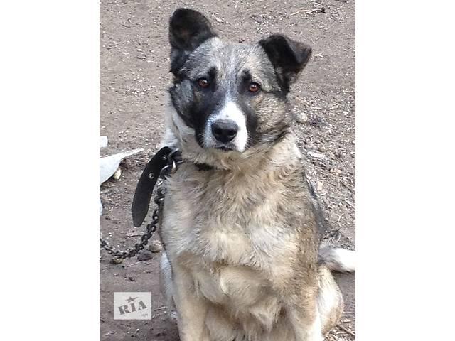 продам Собака бу в Львове