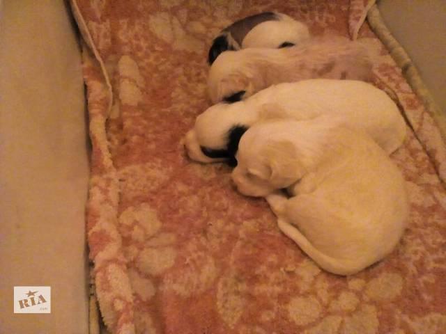 бу Собаки, щенки в Николаеве