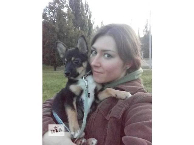 бу Собаки, щенки в Харькове
