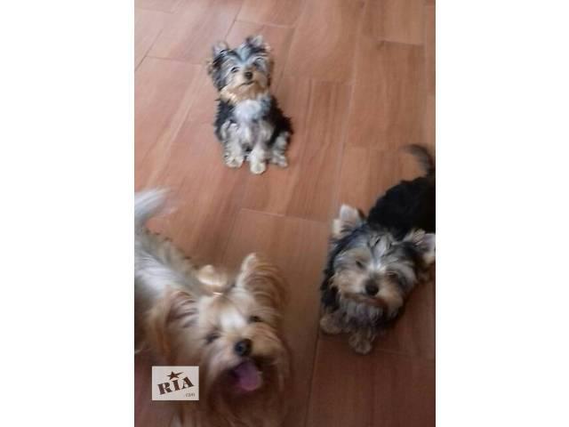 купить бу Собаки, щенки в Сумах