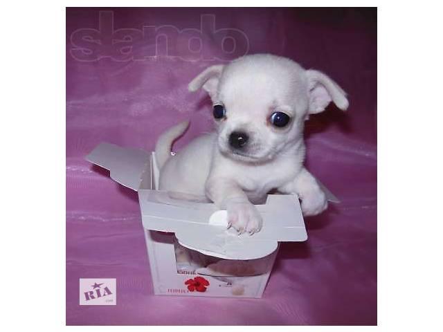 Собаки, щенки- объявление о продаже  в Киеве