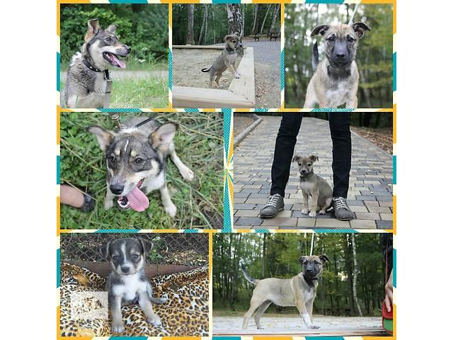 продам Собаки в добрі руки бу в Тернополе