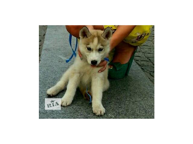 бу Собаки, щенки в Днепре (Днепропетровск)