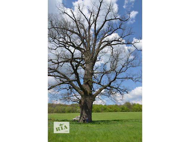 Удаление,спиливание,обрезка,кронирование деревьев- объявление о продаже  в Киевской области