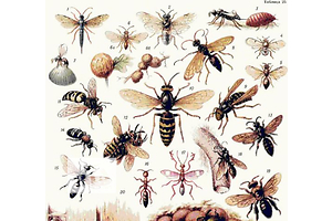 Средства от комаров Антимоль