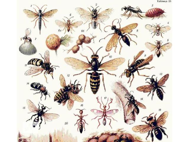 купить бу Средства от насекомых Средства от комаров Антимоль в Киеве