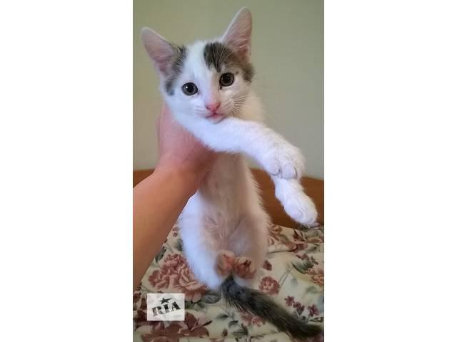 продам Срочно отдаем 3 котят в добрые руки! бу в Киеве