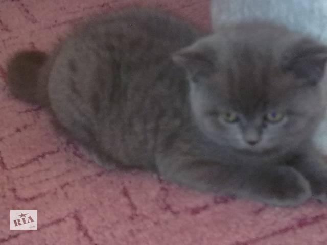 продам  Срочно продается котенок бу в Авдеевке (Донецкой обл.)