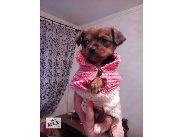 продам Срочно продам щенка  бу в Мариуполе
