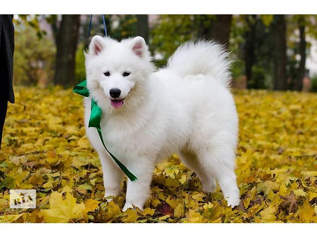 срочно продаются щенки- объявление о продаже  в Ивано-Франковске