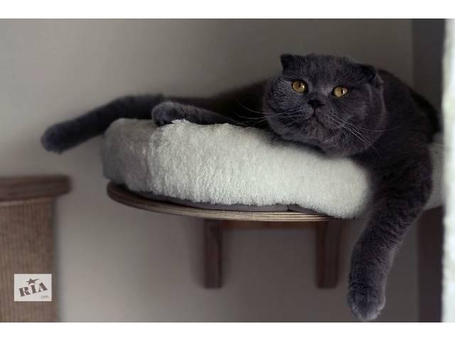 продам Срочно!!! Великолепные  котята  Скотишш фолд! бу в Виннице