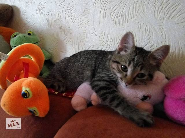 продам Стерилизованной сегодня кошечке срочно нужен дом бу в Виннице