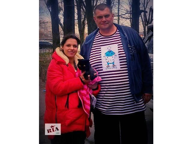 купить бу Стрижка кошек и собак, тримминг, вычесывание.. в Киеве