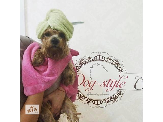 продам  Стрижка собак Dog-Style (200 грн) Акция: 5я стрижка в подарок!!! бу в Киеве