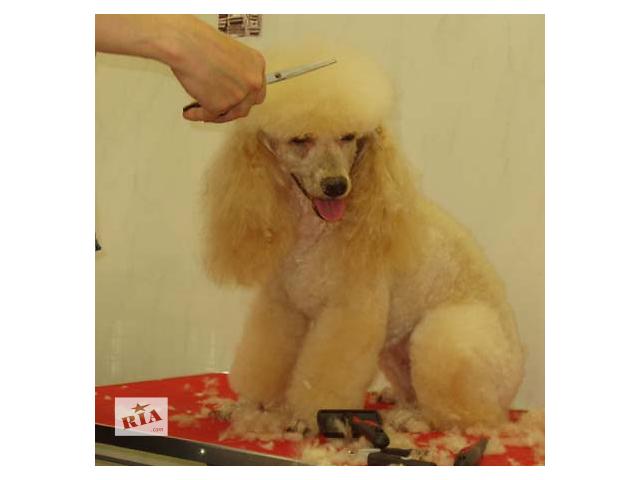 Стрижка собак, стрижка котов Троещина- объявление о продаже  в Киевской области