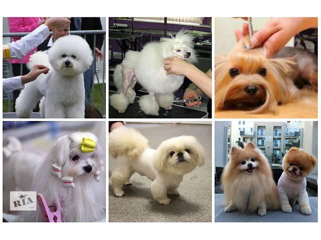 продам Стрижка собак ,тримминг собак, стрижка котов в Тернополе бу в Киеве