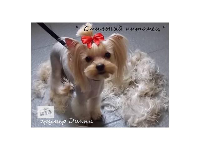 Стрижка собак в Краматорске- объявление о продаже   в Украине