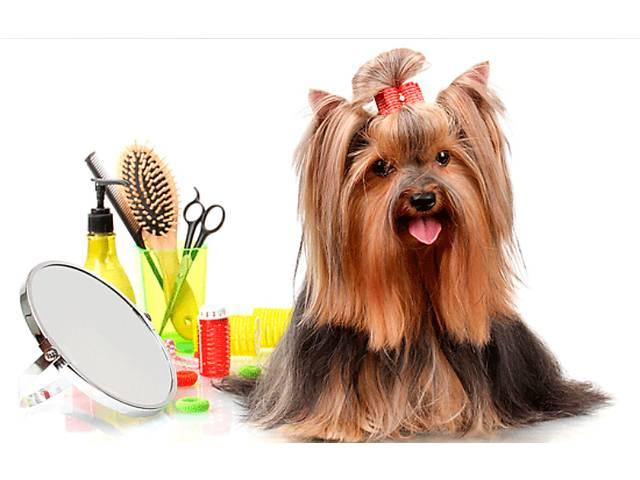 купить бу Стрижка собак и кошек любой породы. Выезд на дом Бесплатно!!! в Одессе