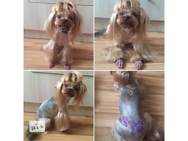 купить бу Стрижка собак и котов.Снятие зубного камня в Харькове