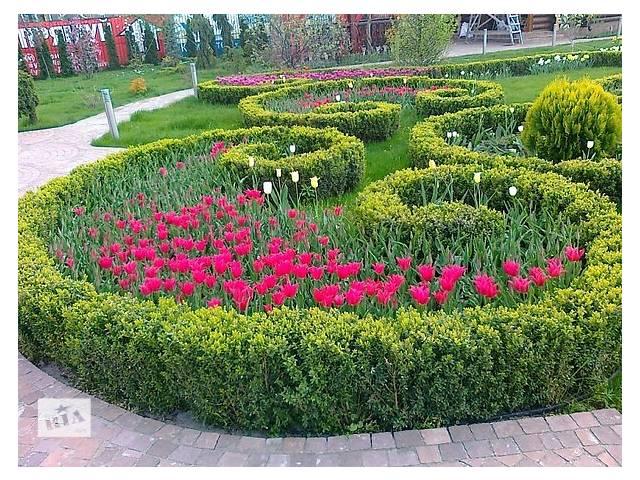 продам створення ландшафтного дизайну бу в Ровно