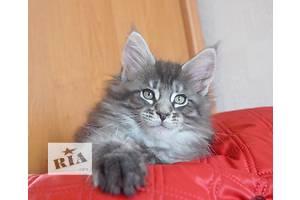 Супер кошеня Мейн-кун! Ласкаві Гіганти!!