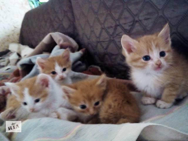 купить бу Супер кошенята у добрі руки в Кременчуге