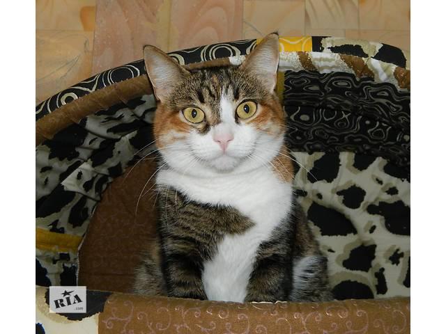 купить бу Супер-ласковая человеческая кошка в добрые руки в Харькове