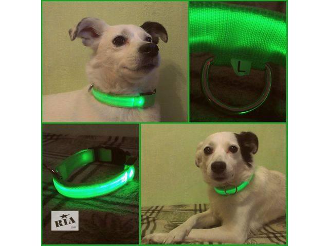 продам Светящийся ошейник для собак LED КИЕВ 95 грн бу в Киеве