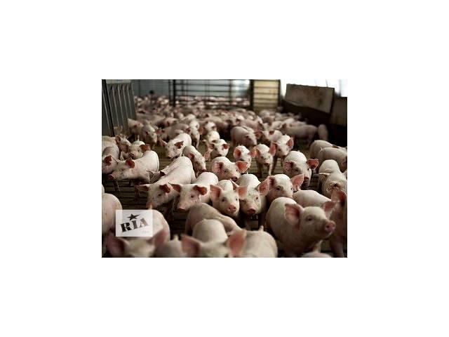 купить бу Свинокомплекс в Житомирской области  в Украине