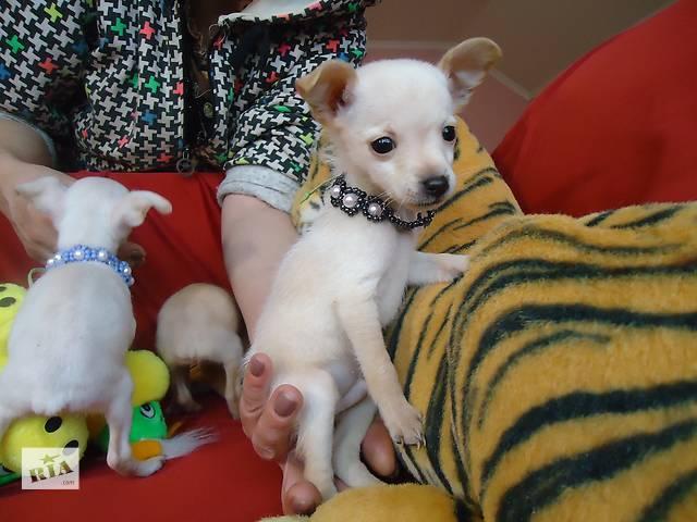 Симпатичные щеночки- объявление о продаже  в Одессе